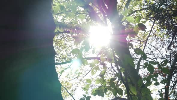 Thumbnail for Sun Coming In And Out Through Trees With Solar Flare 2