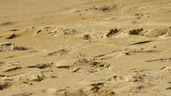 Thumbnail for Crab on the Sandy Beach