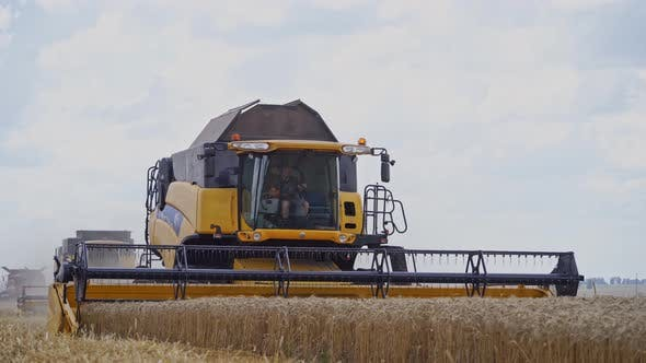 Thumbnail for Farming and agriculture harvesting. Harvesting of wheat field with combine