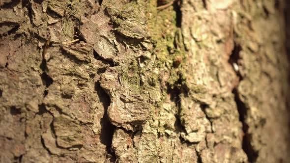 Thumbnail for Macro Bark Tree 3