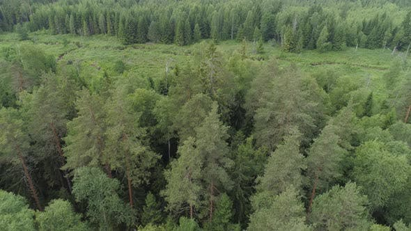 Thumbnail for Flight Over the Green Forest.