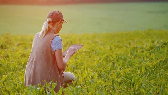 Thumbnail for Ein Bauer arbeitet in einem Feld junger Mais, verwendet eine Tablette