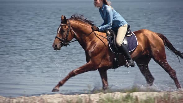Thumbnail for Majestic Russian Don Horse Galloping on Lake