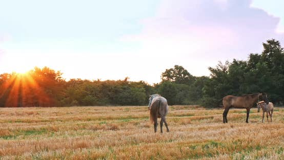 Thumbnail for Beautiful Horses in the Green Meadow