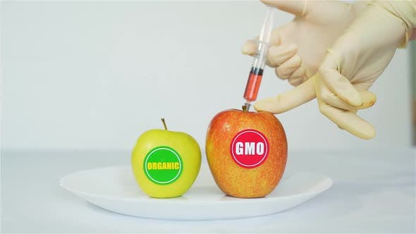 GMO Apple with Injection Over Organic Apple