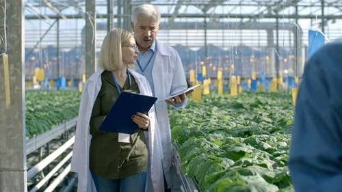 Agronomists Inspecting Commercial Greenhouse