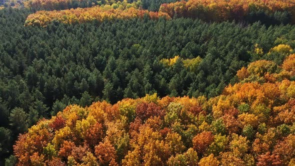 Thumbnail for Aerial View Cinematic Autumn Forest