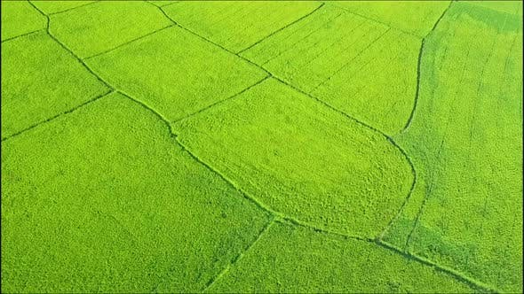 Thumbnail for Close Aerial View of Green Rice Fields Vy Road