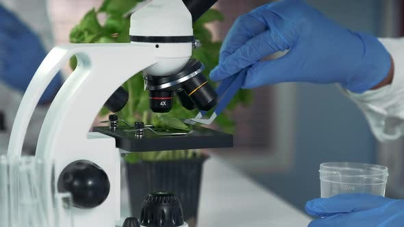 Thumbnail for Close-up of Scientist Using Surgical Pincers To Put Plant Leaf From Microscope Stage To Plastic
