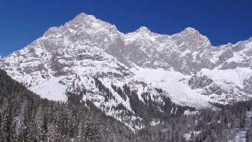Aerial Trees and Mountain Panorama in Winter