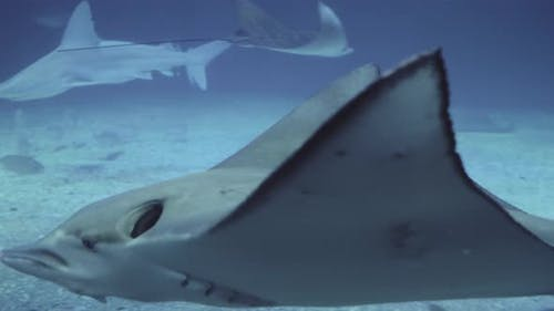Stingrays and Sharks in the Oceanarium