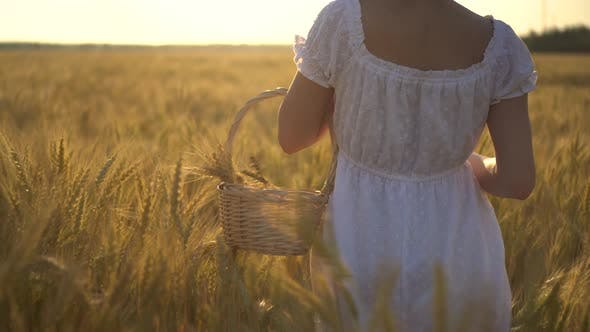 A Young Woman Is Walking on a Yellow Wheat Field with a Basket in Her Hands. Straw Basket with