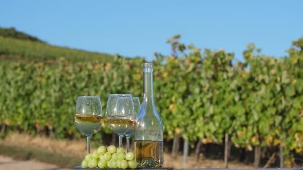 Winery Ground