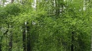 Vertical Video of Many Trees in the Forest