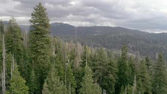 Thumbnail for Aerial Drone View Over Natural Wonders of Sequoia National Park