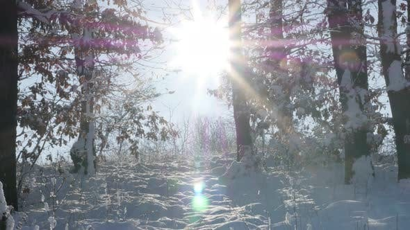 Thumbnail for On sunny day scene with  forest path under snow slow tilt 4K 2160p 30fps UltraHD footage - Early mor