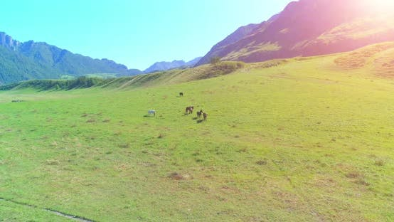 Thumbnail for Flight Over Wild Horses Herd on Meadow. Spring Mountains Wild Nature. Freedom Ecology Concept.