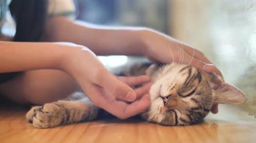 Nahaufnahme der Hände des Mädchens spielt mit schlafender süßer Tabby-Katze.