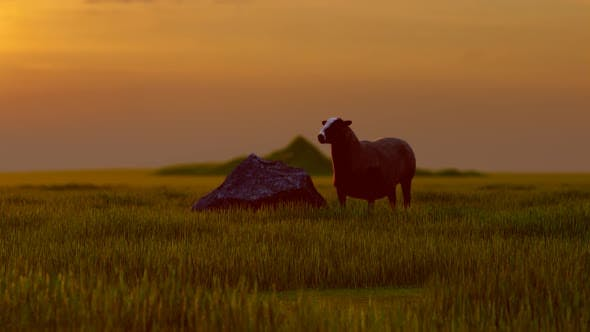 Thumbnail for Lonely Sheep and Sunset View