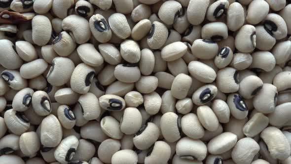 Thumbnail for Kidney Bean