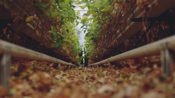 Thumbnail for Wissenschaftler untersuchen Pflanzengesundheit im Treibhaus