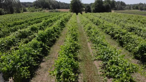 Thumbnail for Countryside Beautiful Farms and Vineyards Beautiful Aerial View