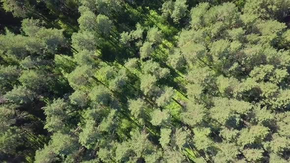 Thumbnail for Aerial: Low Level Flying Over Dense Forest. View - Vertically Down