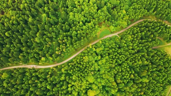Drone Flies Down View on Road in Forest