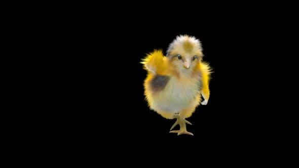 11 Baby Chicks Dancing 4K