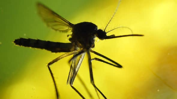 Thumbnail for Mosquito Analysis