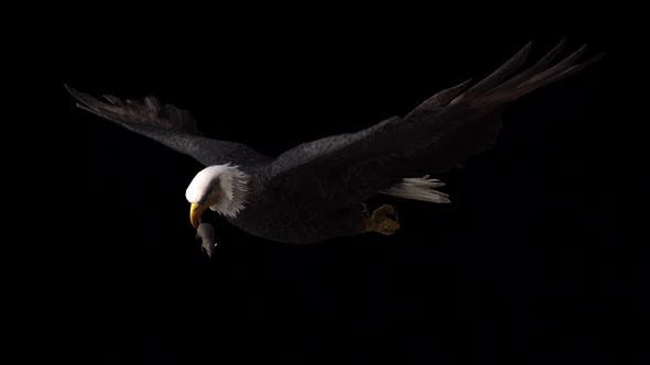 Aigle Avec Souris Chassée