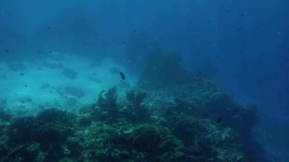 Cover Image for Lots of Fishes Swimming Around Coral Reef on the Sea Bottom