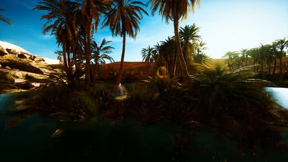 Palm Trees in Sahara Desert