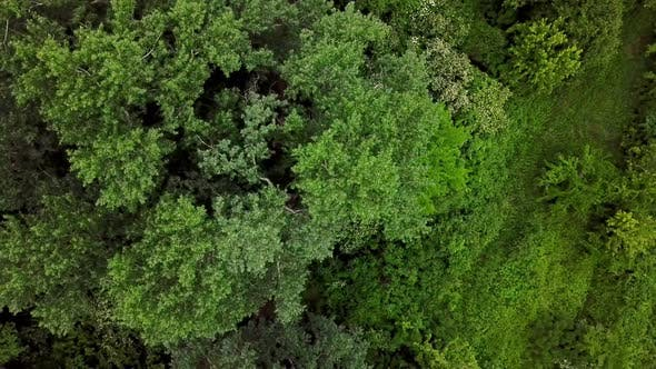 Thumbnail for Drone's Eye View Top Down View of Woodland Mysterious Forest Trees