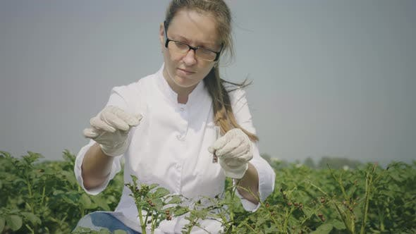 Thumbnail for Agronomist examintate seedlings in field