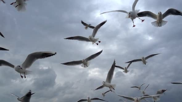 Thumbnail for Flock Of Seagulls Fly Overhead Slow  Motion 17