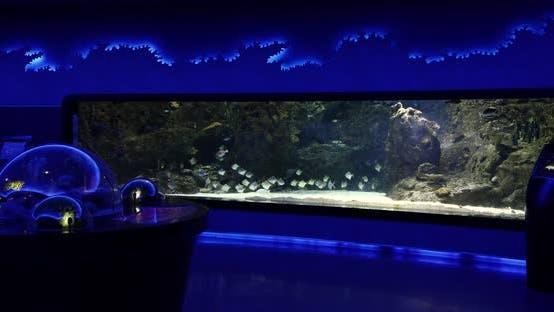 Cover Image for Aquarium 5