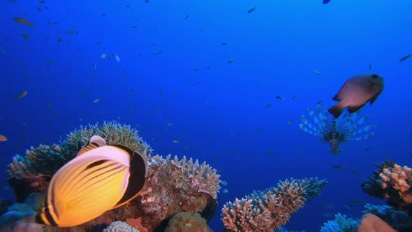 Blue Tropical Sea