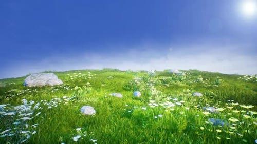 Grass Land 4K