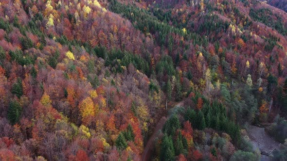 Aerial Images With  Wild Forest In Autumn.