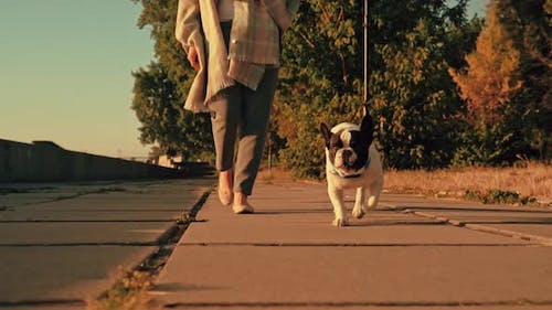Female with French Bulldog Outdoors