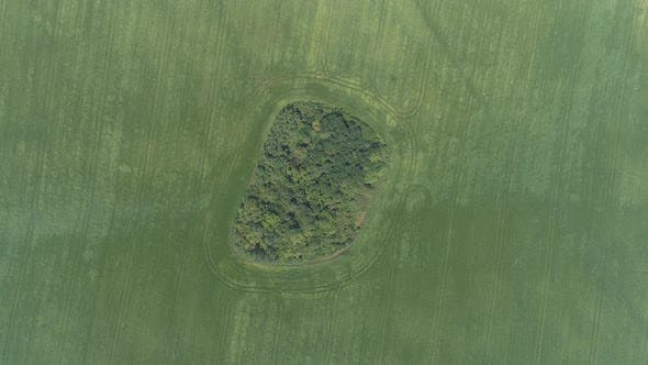Thumbnail for Aerial view of green fields and trees