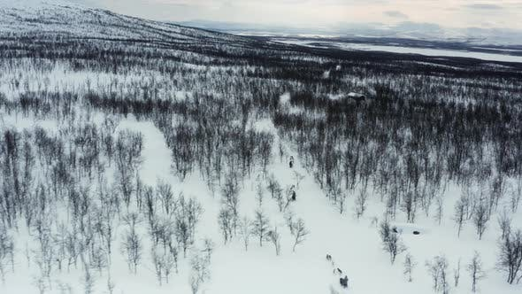 Thumbnail for Orbiting Dogsleds in Action, Lappland, Sweden