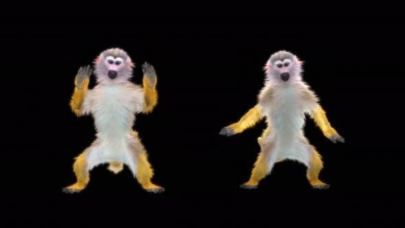 Thumbnail for Monkey Dance 4K