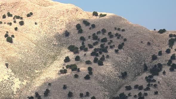 Sparse Trees On Arid Stony Mountain Slope