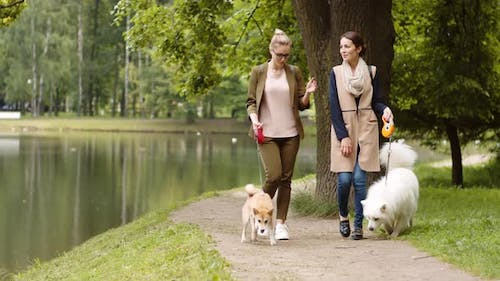 Pleasant Walk with Pets