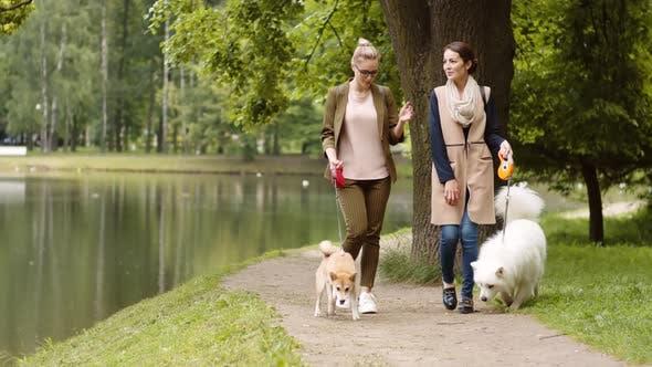 Thumbnail for Promenade agréable avec animaux domestiques