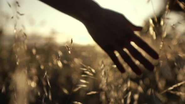 Hand in the Field