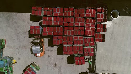 Transportation Of Fruit By Forklifts. Aerial View.