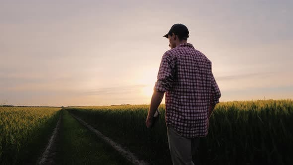 Cover Image for A Successful Farmer Walks Along His Wheat Field at Sunset